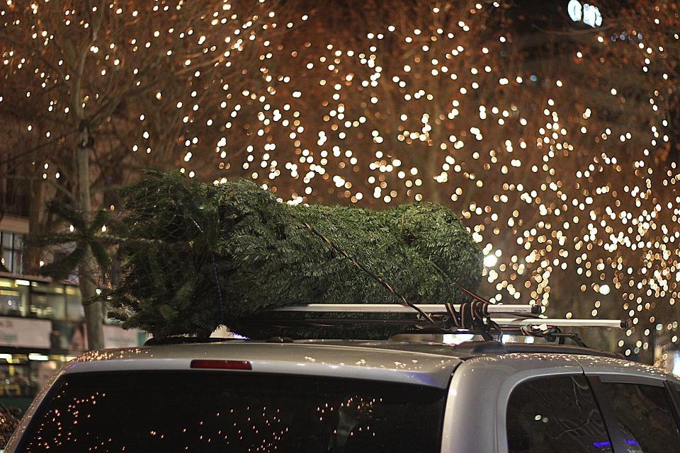zabalený vánoční stromek