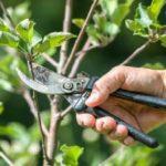 Jak na prořezávání stromů