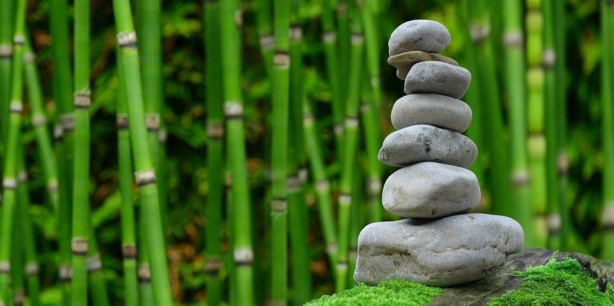 Jak na pěstování bambusu? Přečtěte si naše rady.