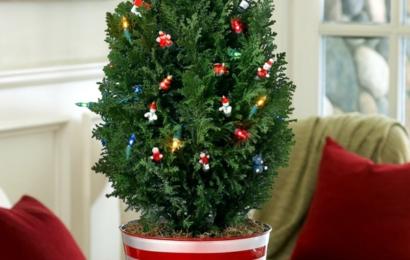Vánoční stromek v květináči, co musíte udělat, aby přežil